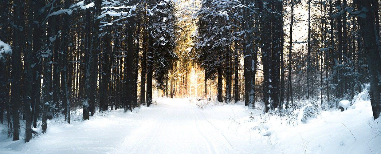 Slider-Startseite-Winterwanderweg